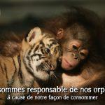 Endangered Sumatran Tiger Cubs Born In Indonesia