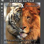 Magazine-LES-FELINS-N°10